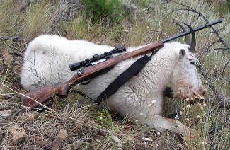 The first Rocky Mountain Goat harvested         with the .411 Ryan